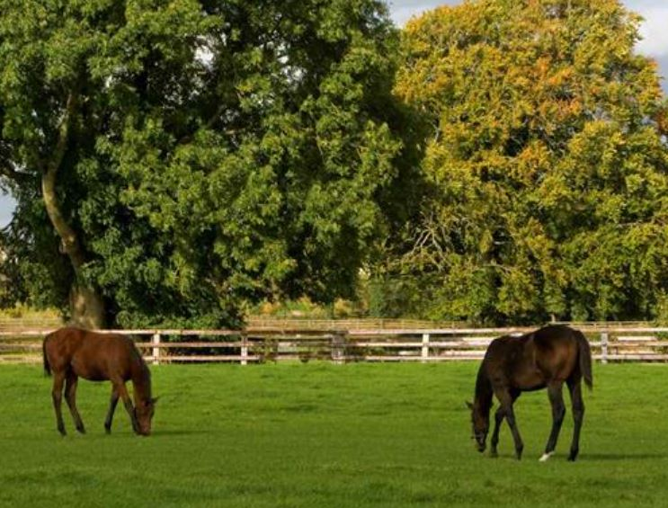 Irish National Stud Farm